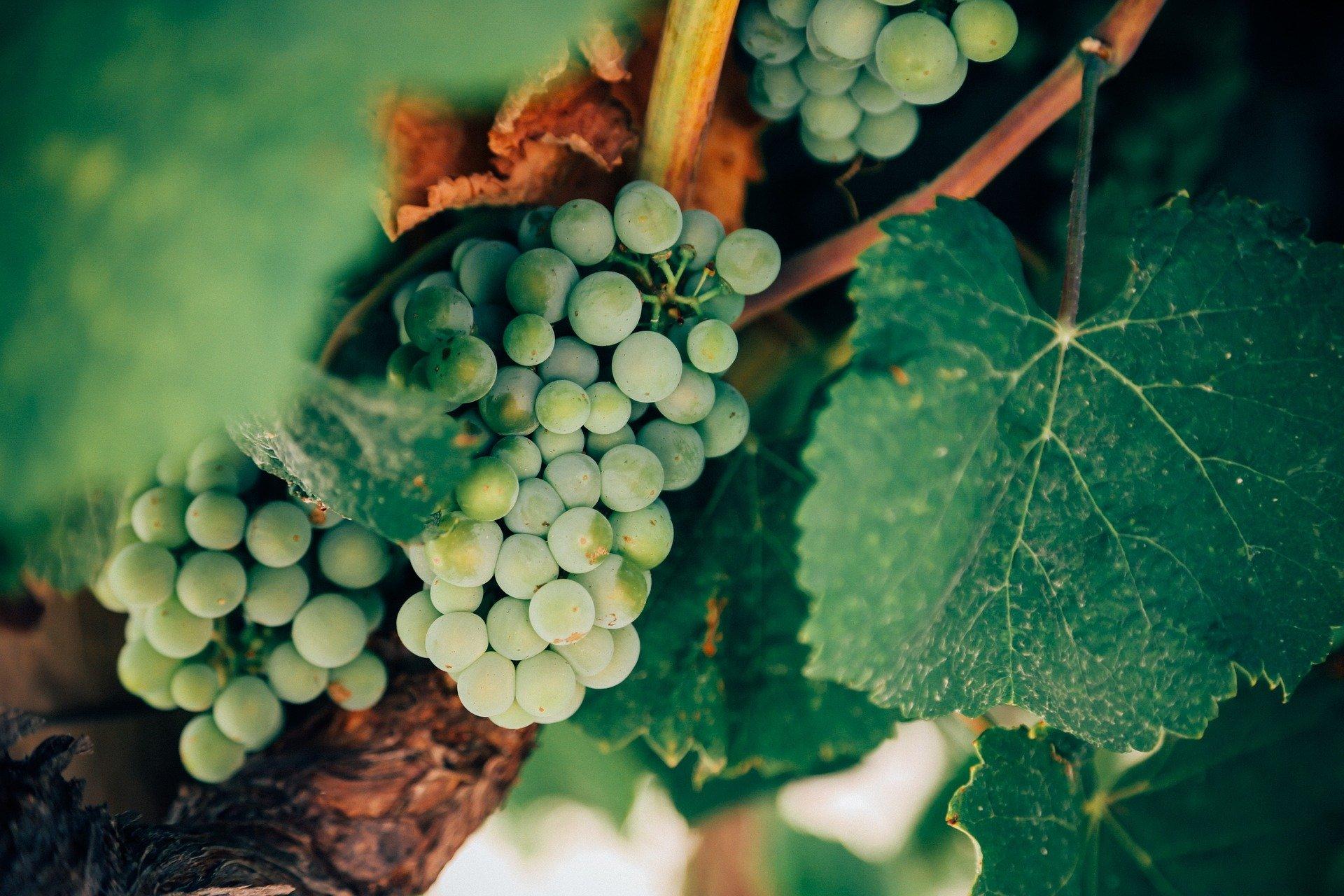 Cabinet Carpier - Droit de la vigne et du vin